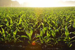 Drones and their Use in Agriculture