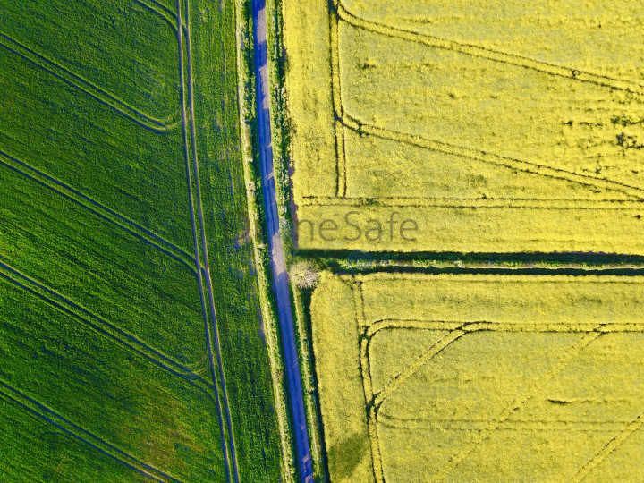 Oil seed crop fields